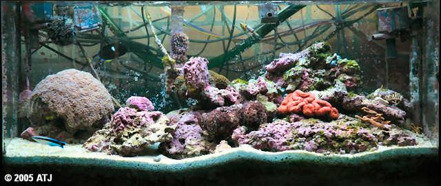 Atj S Marine Aquarium Site 40g2